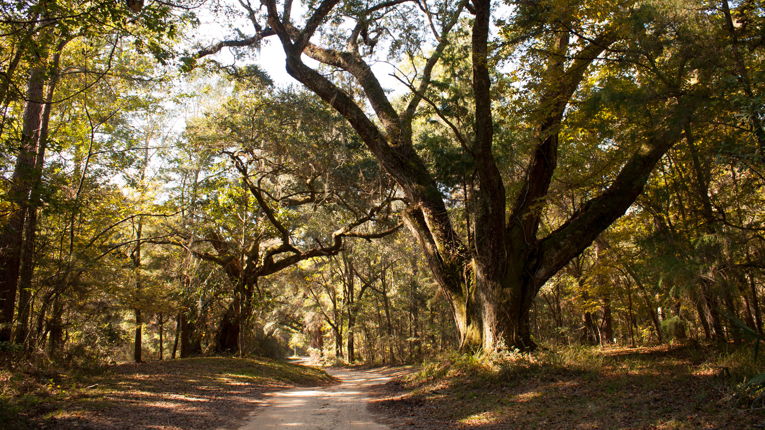 Blakeley State Park