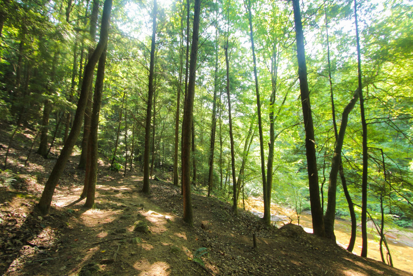 Thompson Creek Trail Campsites - Bankhead National Forest